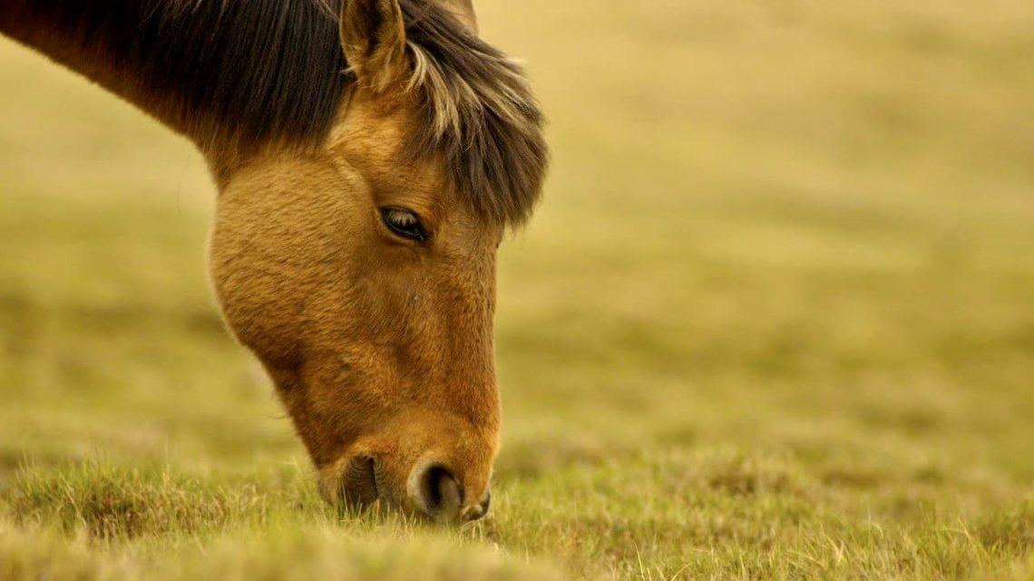 Les compléments alimentaires vraiment primordiaux pour le cheval