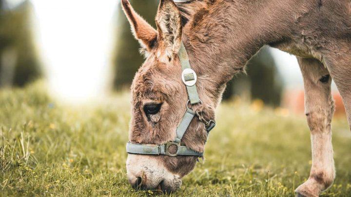 14 raisons pour lesquelles un âne est le compagnon de randonnée idéal