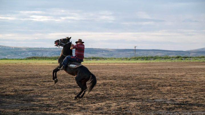Le cheval Morgan