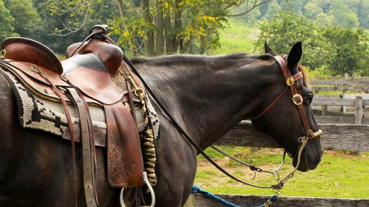 Les bases de la location d'un cheval : ce que vous devez savoir !