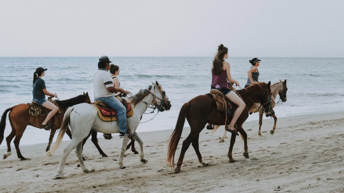 Les 10 meilleures races de chevaux pour les nouveaux propriétaires et cavaliers