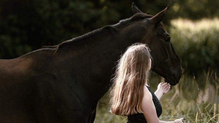 Apprenez à votre cheval à venir quand on l'appelle