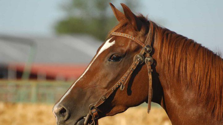 Les chevaux peuvent-ils voir dans l'obscurité ?